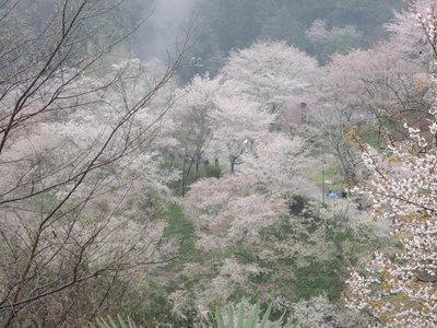 吉野へ_b0252363_10534869.jpg