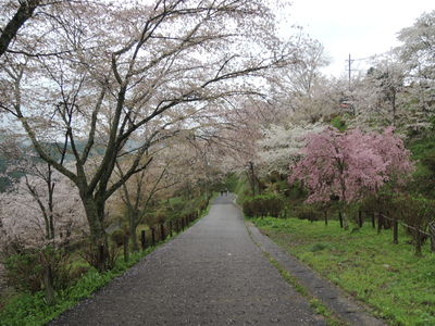 吉野へ_b0252363_10552436.jpg