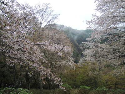 吉野へ_b0252363_1173897.jpg