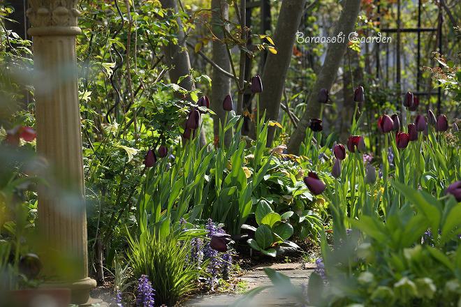 花たちの囁き~今朝の庭から_a0135366_1019516.jpg