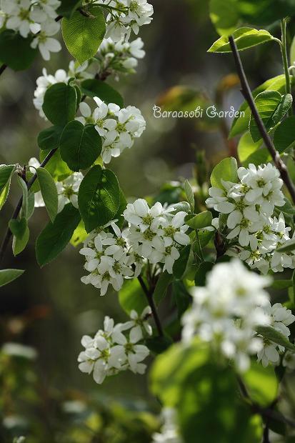花たちの囁き~今朝の庭から_a0135366_10203540.jpg