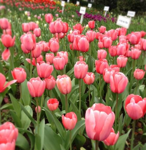 横浜校 4月のソーイング講座_d0091671_158503.jpg