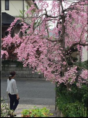 楽しかった上京♪と生徒さん作品♪_e0276388_15062327.png