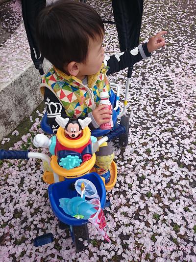 桜絨毯_e0298288_15373364.jpg
