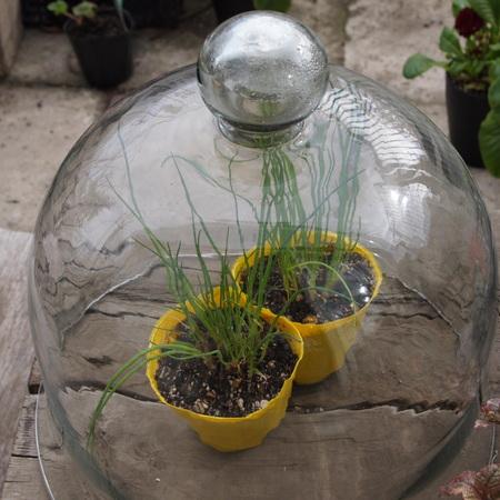 ガラスの温室_a0292194_17341577.jpg