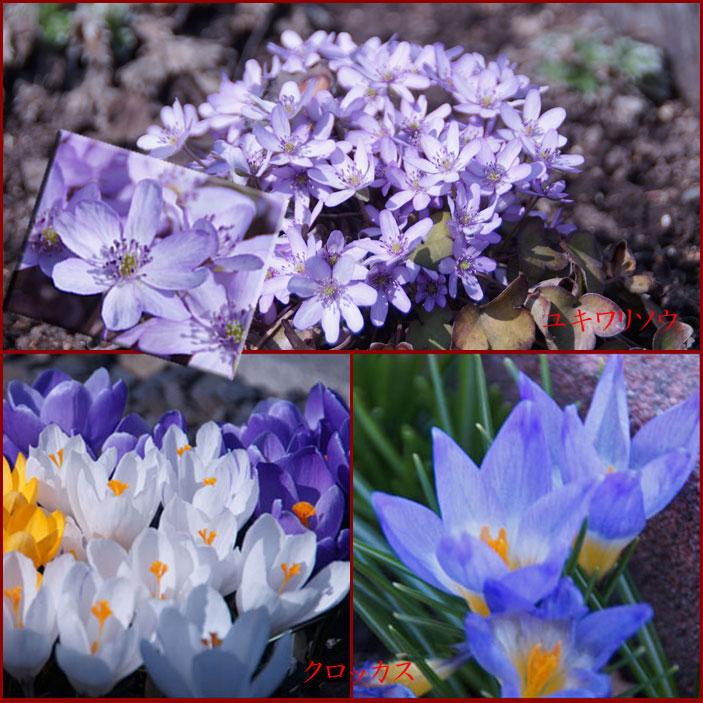 春の花_d0162994_16413087.jpg
