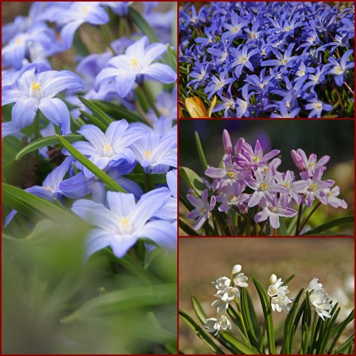 春の花_d0162994_919314.jpg