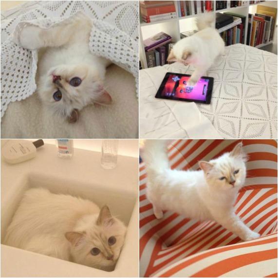 世界一有名な猫ちゃん、カール・ラガーフェルドさんの愛猫シュペットちゃん、昨年400万ドルほど稼ぐ?!_b0007805_19302449.jpg
