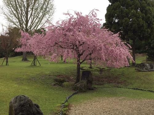 雨の奈良公園_a0326106_15494999.jpg