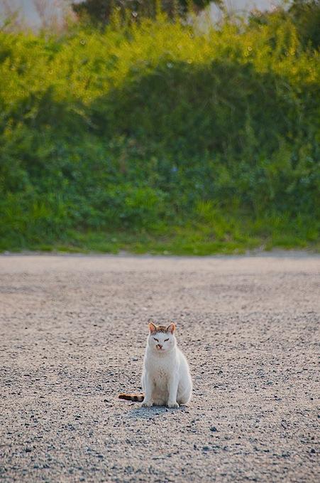 猫の殺処分_d0073743_18152390.jpg