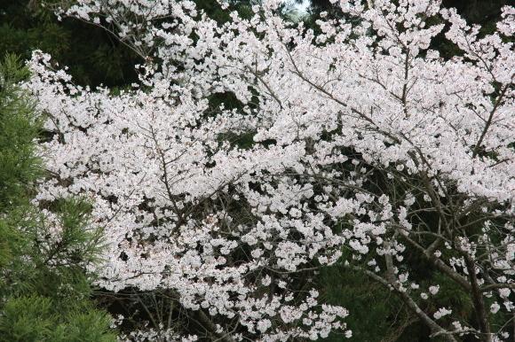 豚竜田揚げ弁当&突然京都旅行&感謝を込めて朝ごはん。_c0326245_10221602.jpg