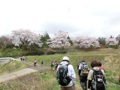 我が町シリーズ日野春(桜)_f0019247_10124298.jpg