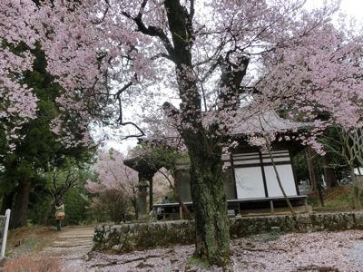 我が町シリーズ日野春(桜)_f0019247_1015207.jpg