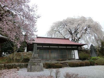 我が町シリーズ日野春(桜)_f0019247_1025767.jpg