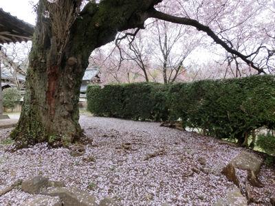 我が町シリーズ日野春(桜)_f0019247_10262919.jpg