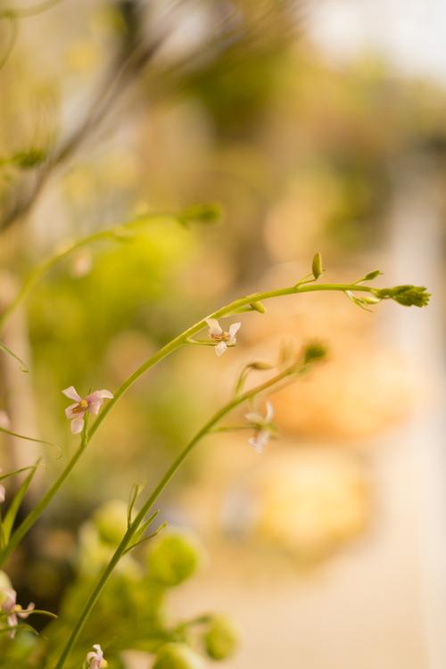 Rêve de printemps  ~春の夜の夢~_d0162257_8134120.jpg