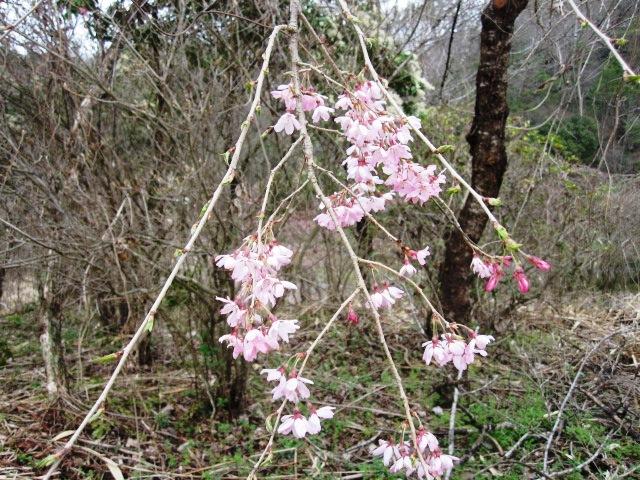 桜も咲いて_f0085369_21544780.jpg
