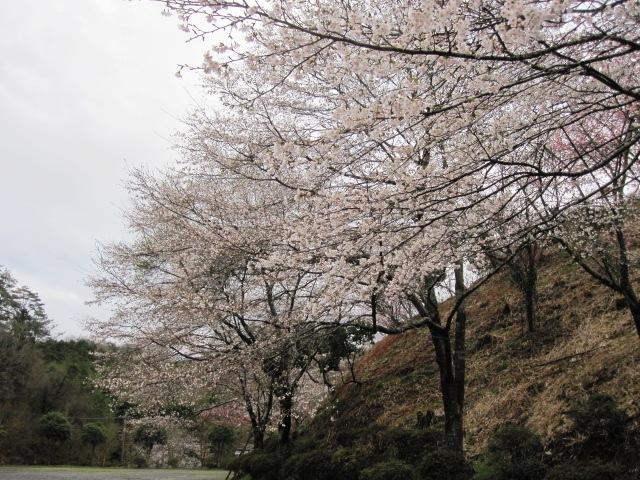 桜も咲いて_f0085369_21551731.jpg