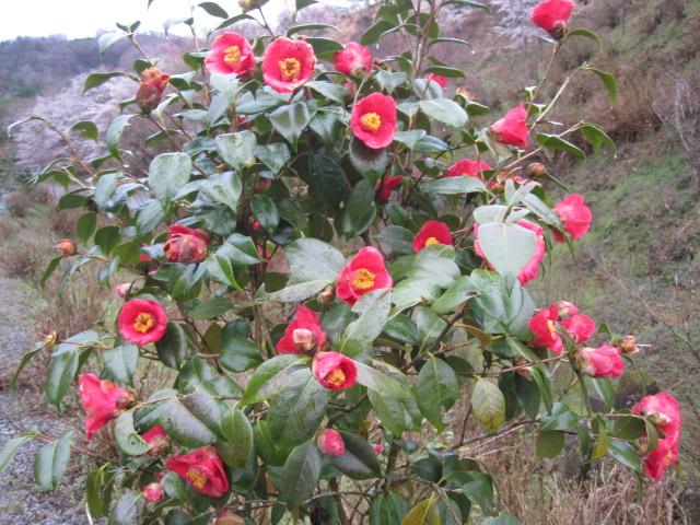 桜も咲いて_f0085369_2158469.jpg