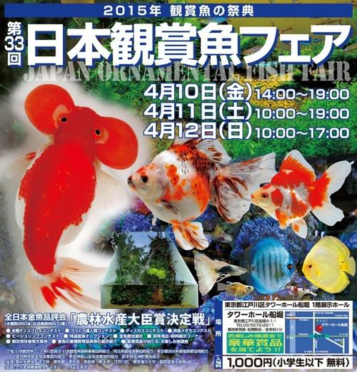 観賞魚フェア(2015)…vol.1_b0298605_181278.jpg