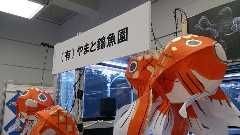観賞魚フェア(2015)…vol.1_b0298605_1895880.jpg