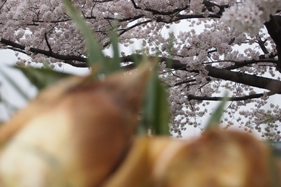 花には嵐?_a0254818_1512388.jpg