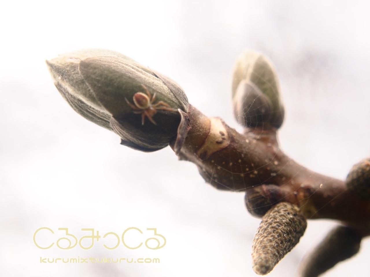 くるみ畑の春_c0363428_18270619.jpg