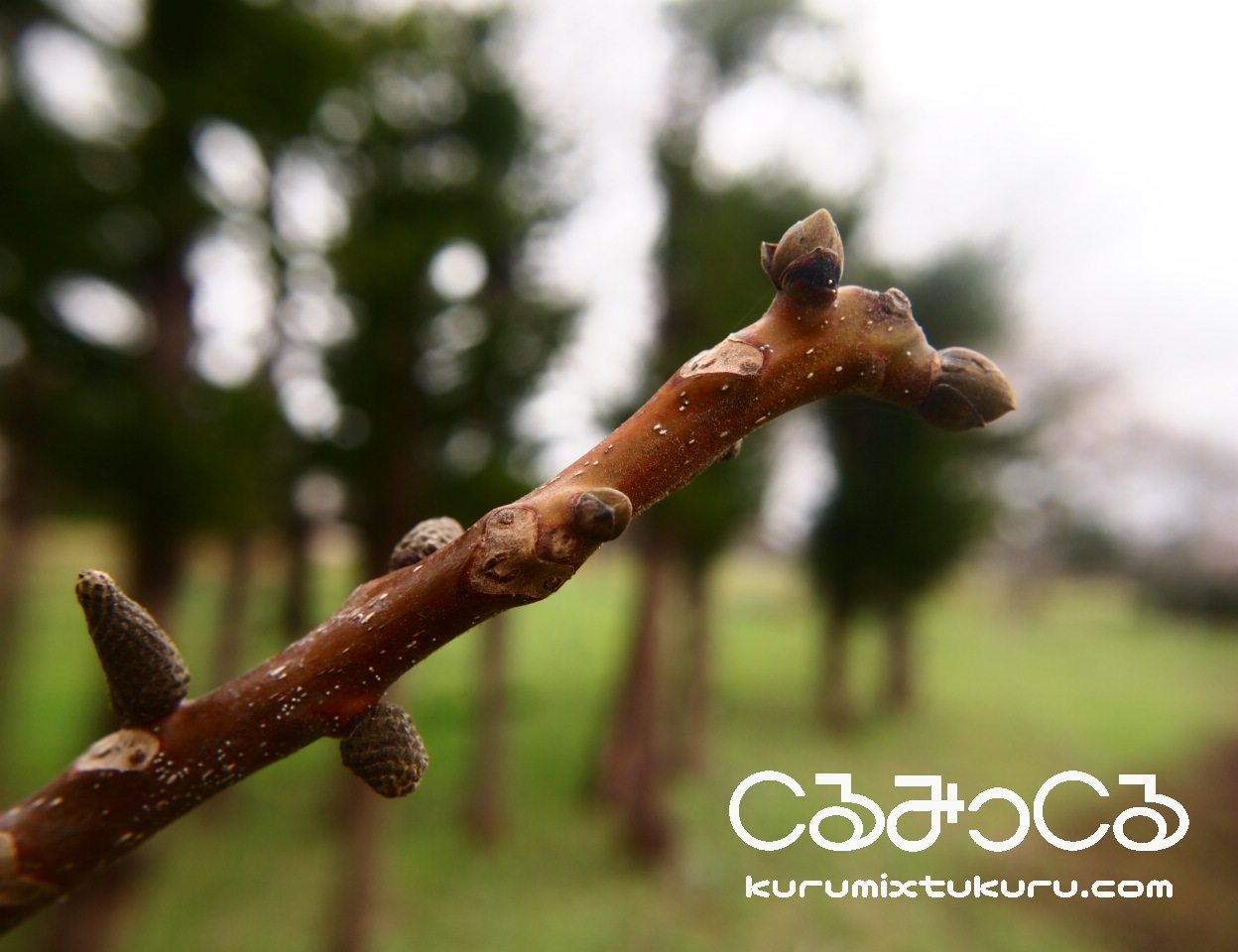 くるみ畑の春_c0363428_18270635.jpg