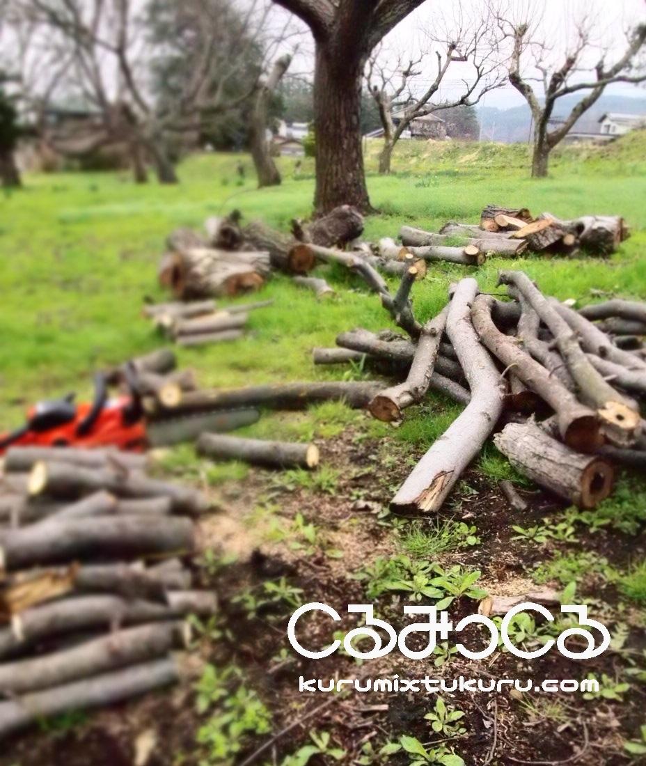 くるみ畑の春_c0363428_18324036.jpg