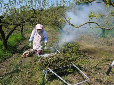 熊本梨 岩永農園 梨の花とミツバチによる交配(受粉)の話_a0254656_1985880.jpg