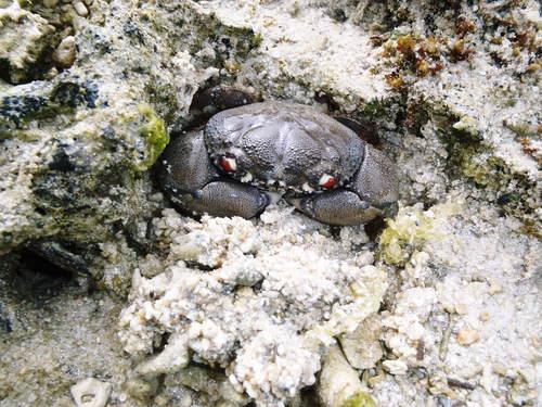 カーミージーの昼の海の散策_c0180460_1320337.jpg