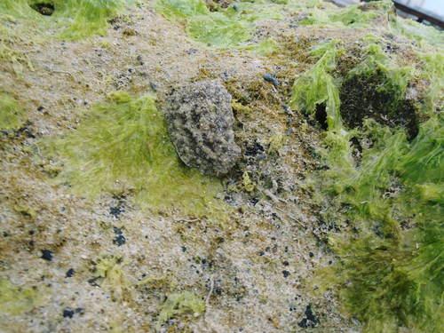 カーミージーの昼の海の散策_c0180460_13224346.jpg