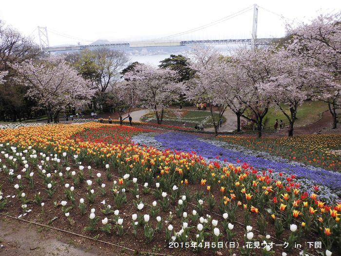 4月例会 花見ウオーク in 下関_b0220064_20412114.jpg