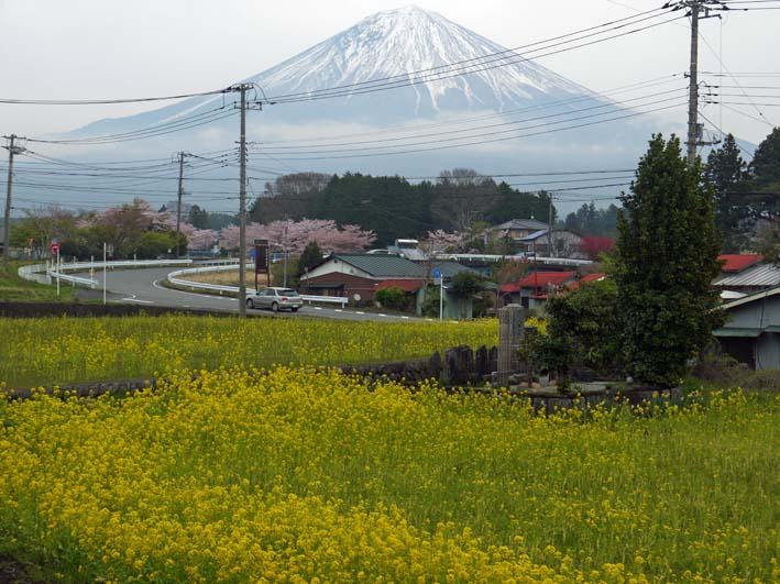 富士の裾野で日本最古の山桜・狩宿の下馬桜に対面4・10_c0014967_12345216.jpg