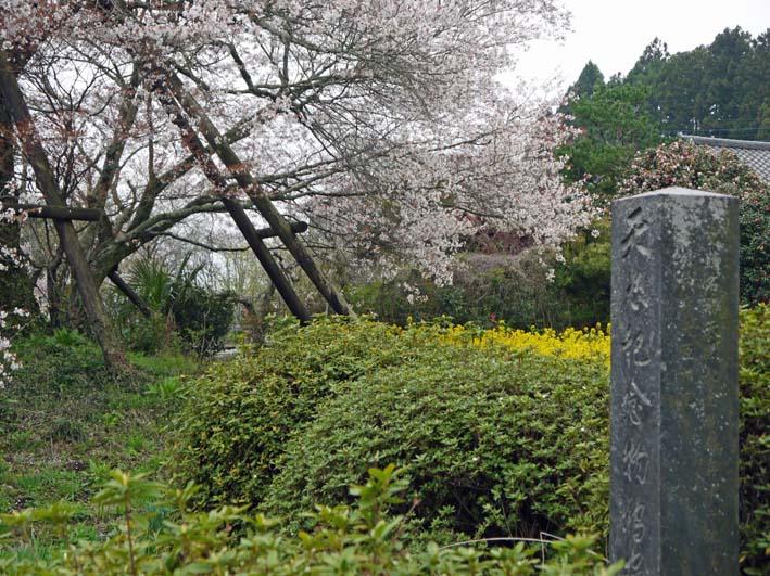 富士の裾野で日本最古の山桜・狩宿の下馬桜に対面4・10_c0014967_12352165.jpg