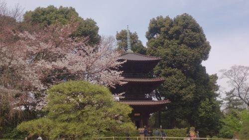 椿山荘と護国寺の春2015_c0122270_06384198.jpg