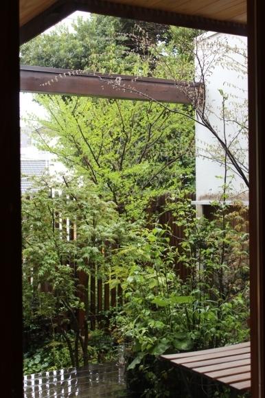 もうすぐ新緑の季節です_c0310571_06052088.jpg