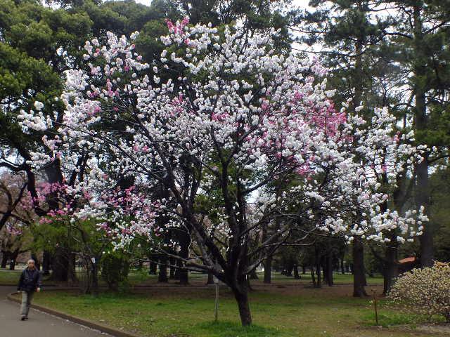 4月10日 小金井公園見て歩き その他編。_e0145782_17481159.jpg