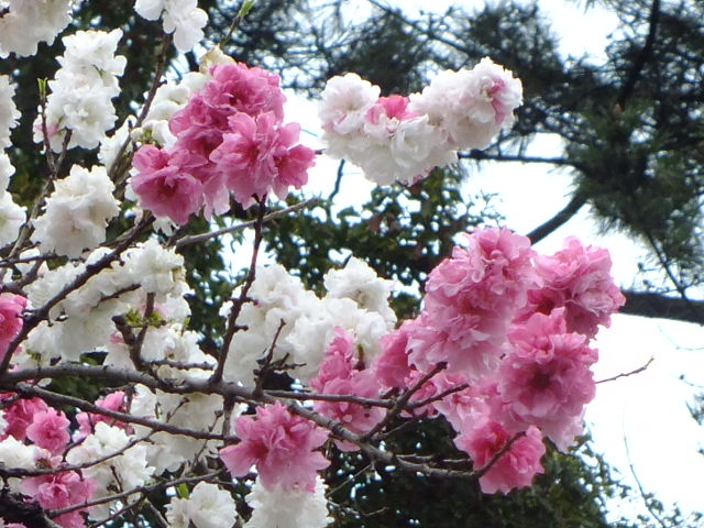 4月10日 小金井公園見て歩き その他編。_e0145782_17484749.jpg