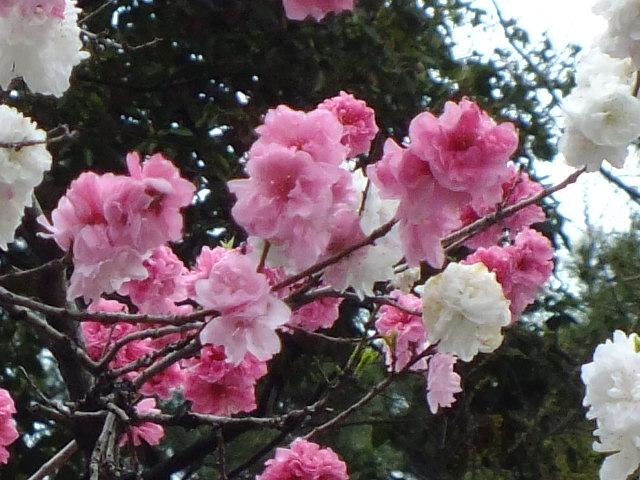 4月10日 小金井公園見て歩き その他編。_e0145782_17491059.jpg