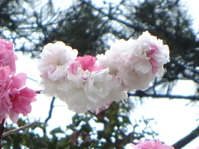 4月10日 小金井公園見て歩き その他編。_e0145782_17493875.jpg