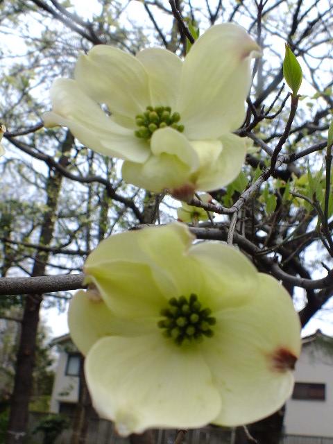 4月10日 小金井公園見て歩き その他編。_e0145782_17534677.jpg