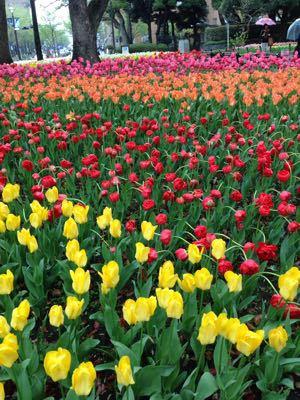 4月のロゼブランシェ_c0195496_045555.jpg