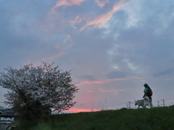 桜の花道を歩いてみました(*^_^*)_c0049299_2248588.jpg