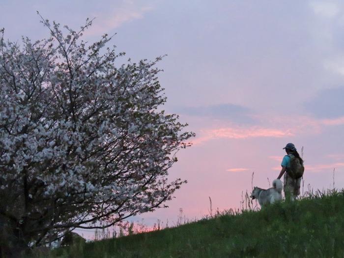 桜の花道を歩いてみました(*^_^*)_c0049299_2249660.jpg