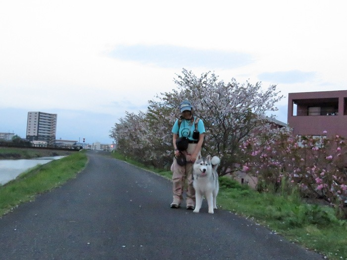 桜の花道を歩いてみました(*^_^*)_c0049299_2372472.jpg