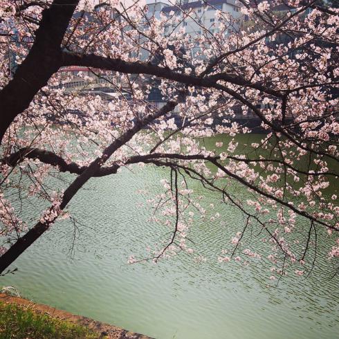 日本滞在とお料理教室_a0215008_19325389.jpg