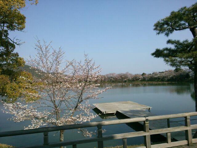 すっかり今は葉桜ですが_b0330312_19083139.jpg