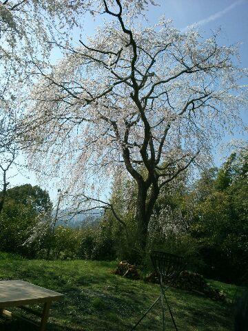 すっかり今は葉桜ですが_b0330312_19084165.jpg