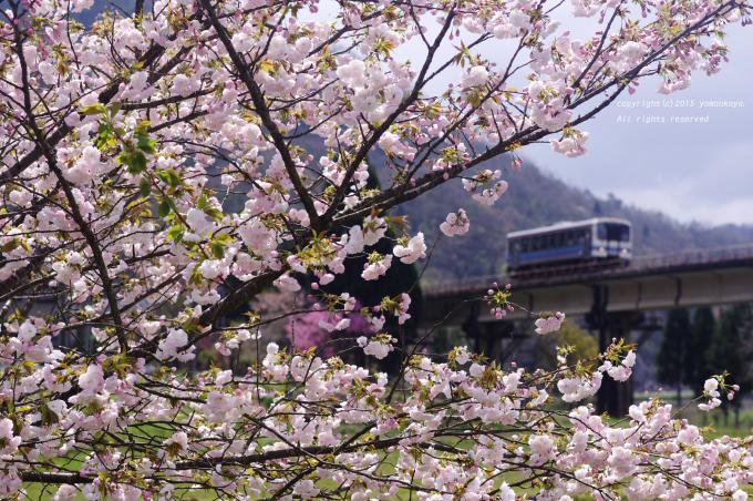 八重桜が咲き始め_d0309612_23562375.jpg